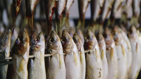 fishing industry : Fish strung on a skewer. Wind drying fish Stock Footage