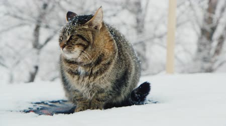 gato selvagem : Cat meets the winter