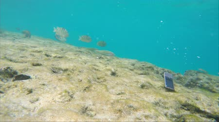 wallow : Phone falls to the sea floor near swimming exotic fish