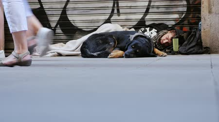 garça real : Barcelona, Spain - June 15, 2016: A homeless man with a dog sleeping on the street. Past him are many tourists feet. Lower angle shooting