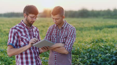cultivar : Two young farmer discussing works in the field at sunset. Hold the tablet in hands Vídeos