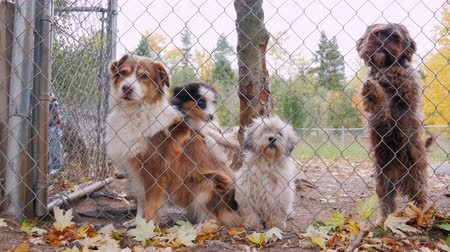 umma : Funny and cute puppies of different breeds of dogs. Jump and bark at the net whether the animal shelter kennel