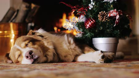 boŻe narodzenie : All receive gifts for Christmas. Even a pet dog.