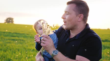 dmuchawiec : Young father playing with his son - blowing on dandelions. Slow motion