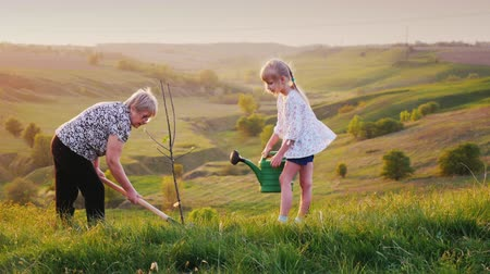 dobrovolník : Senior woman, together with her granddaughter, plant a tree. Against the background of a beautiful green landscape. Concept - activity in the elderly, a healthy lifestyle