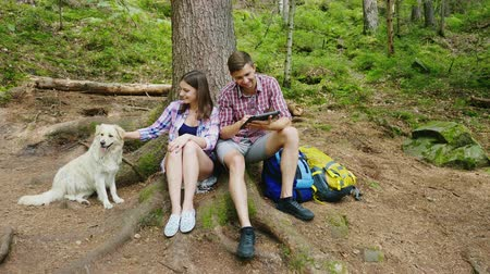 pointing dogs : Young couple with a dog rest on a halt in the forest. They sit under a tree and use a tablet. Always online, friendly family with a pet Stock Footage