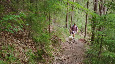 pointing dogs : A young couple with backpacks walks along a mountain path in the forest. With them their favorite dog. We travel together with the pet, active rest