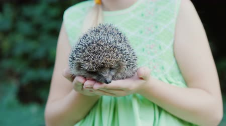 prickly : A happy child holds a small hedgehog in his hands. Children and wildlife, a well-healed and caring concept. Stock Footage