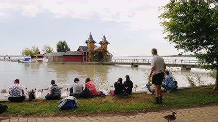 magyarország : Keszthely, Hungury, June 2017: People rest in a park near Lake Balaton. They sit on the grass by the water, the swans of the swans