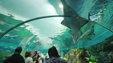 hayvan kafa : Toronto, Ontario, Canada, October 2017: People in a glass aquarium tunnel. With admiration, they look at the shark and the sawfish in their heads, Ripleys Aquarium