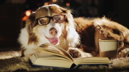 кружка : A dog in glasses is dozing near an open book. Nearby is a cup of tea. Warmth and comfort in the house, waiting for the owner of the concept Стоковые видеозаписи