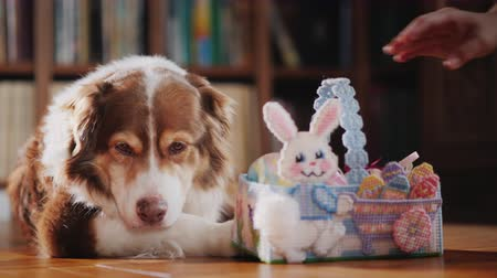 króliczek : The dog receives a gift for Easter - a basket with decorative eggs. We celebrate with the whole family Wideo
