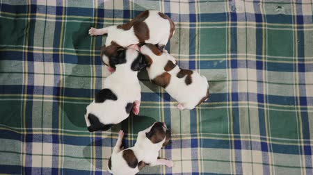 köpek yavrusu : Four newborn puppies lie on the rug, cuddle together