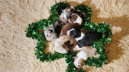 striving : Several puppies sit in ornamental green decoration for St. Patricks Day