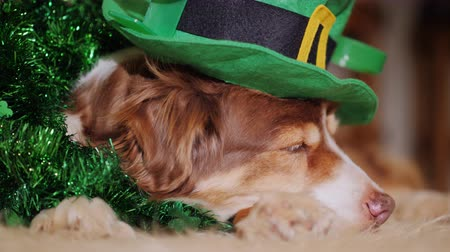 dolgok : Portrait of Cool dog in a green hat. Meet St. Patricks Day