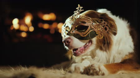 deitado : A dog in a carnival mask. He is resting near the fireplace.