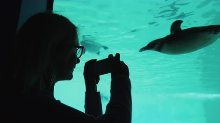 pinguim : A visitor to the zoo takes pictures of the underwater inhabitants through the transparent wall of the pool