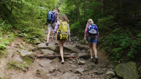 silvicultura : Three friends of tourists are walking along a mountain path in the forest. Back view. Active and healthy lifestyle