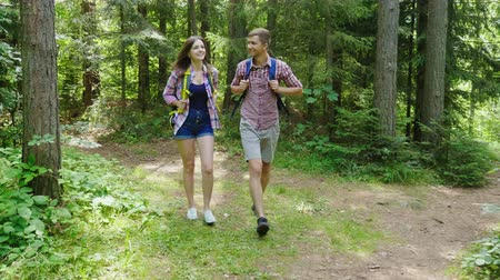 silvicultura : Young attractive couple is walking in the forest. Hiking and active lifestyle. Steadicam shot Stock Footage