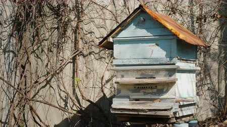 hive : Hive with bees. Bees actively fly - they began to collect honey with the arrival of spring