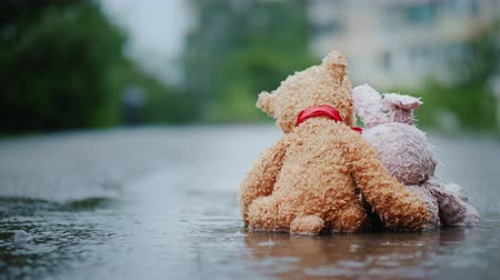 věrný : Faithful friends - a bunny and a bear cub sit side by side on the road, wet under the pouring rain. Look forward, embrace. Rear view Dostupné videozáznamy