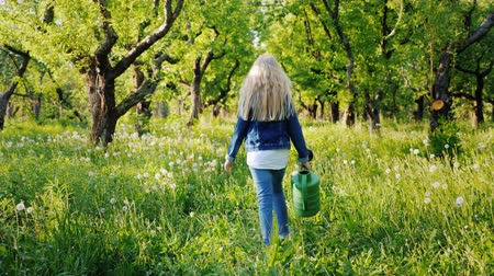 konewka : A little girl with a watering can goes on an apple orchard. Rear view
