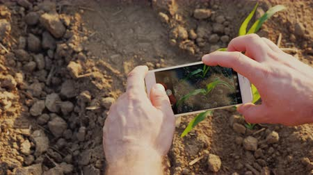 agronomist : Hands of a farmer who photographs green shoots on the field. There is a screen with a picture of a sprout of maize. Top view Stock Footage
