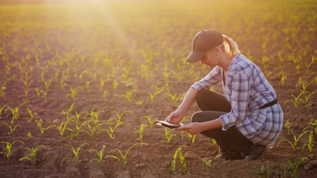 rolník : A female farmer is working in the field at sunset. Studying plant shoots, photographing them using a tablet
