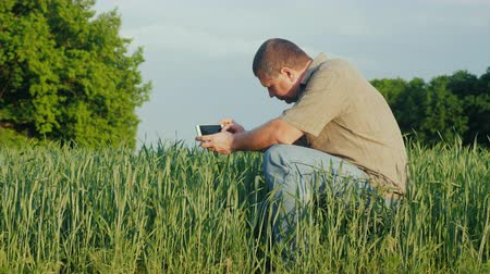 agronomist : A middle-aged agronomist photographs green wheat sprouts Stock Footage