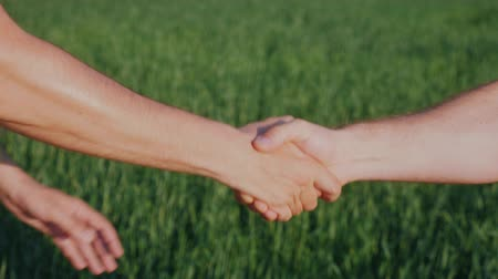 egyetért : Friendly handshake of two male hands. Against the background of a green wheat field
