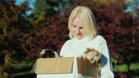 köpek yavrusu : A woman holding a box of puppies in her hands Stok Video
