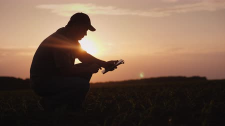 inspeção : A farmer is working in the field at sunset. Studying plant shoots, using a tablet Vídeos