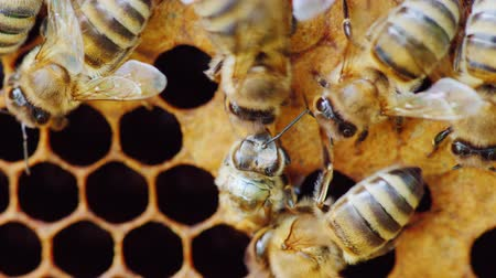 hive : A newborn bee appears from the honeycomb cell. The birth of a new life