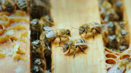 hive : Bees work inside the hive Stock Footage