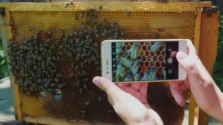 makro fotografie : The beekeeper photographs a frame with bees. Working in the Apiary