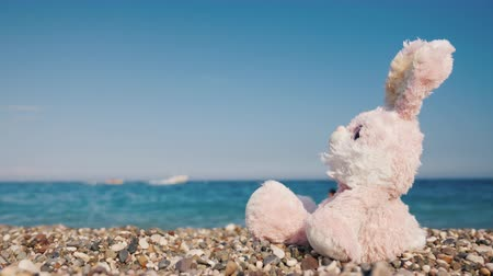 króliczek : The toy hare is resting on the seashore. Takes sun baths Wideo