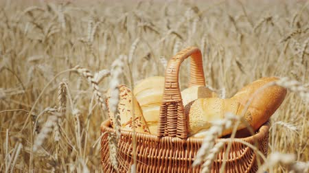 продукт : A set of cereals in a basket on a wheat field. Clear summer day Стоковые видеозаписи