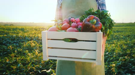 box set : A young farmer is holding a wooden box with vegetables from his field. In the picture, only the hands are visible. Fresh and healthy products Stock Footage