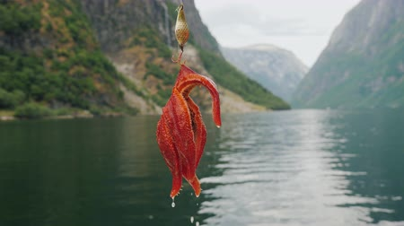 hvězdice : A starfish hangs on a hook against the backdrop of a fjord in Norway Dostupné videozáznamy