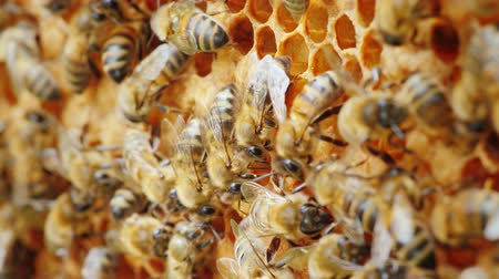 hive : Ecologically clean production. Bees are engaged in the production of delicious honey from a natural product
