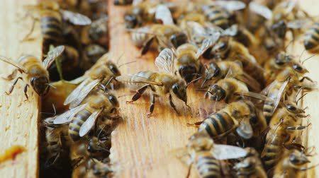 hive : A lot of bees work in a hive to create a delicious honey. Close-up Stock Footage