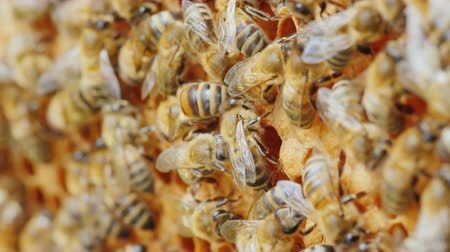 hive : Entertaining bee life, amicable team work on the creation of delicious honey Stock Footage