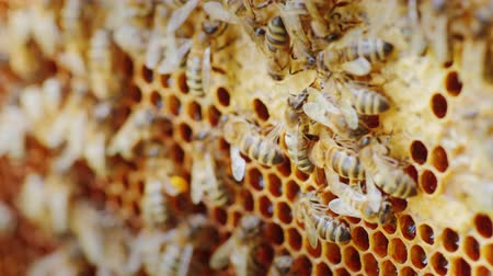hive : Bees work in a hive, video with a shallow depth of field