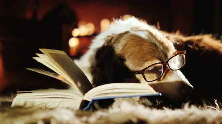 şömine : Senior dog in glasses is dozing near an open book. Warmth and comfort in the house, waiting for the owner of the concept