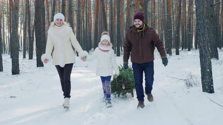 dragging : A married couple with a child walks through a snow-covered forest, a girl is dragging a sled with a Christmas tree. Christmas Eve and New Years Eve. Stock Footage