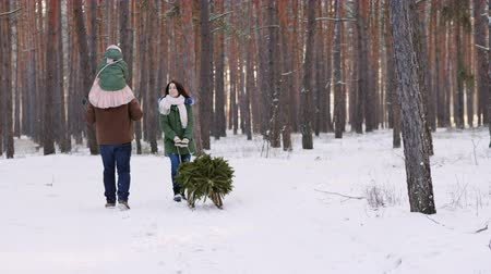 tradição : Two parents with a child driving a New Year tree on a sled on a snowy forest. Rear view