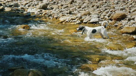 tlapky : A brave dog tries to cross a rough mountain river Dostupné videozáznamy