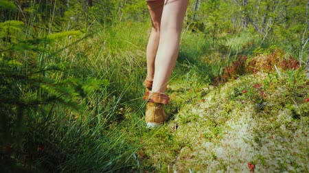 marsh : The feet of the traveler go through moss and damp swamps. Lost world of the swamp, a journey through the unknown