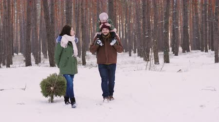 tradição : Two parents with a child driving a New Year tree on a sled on a snowy forest.