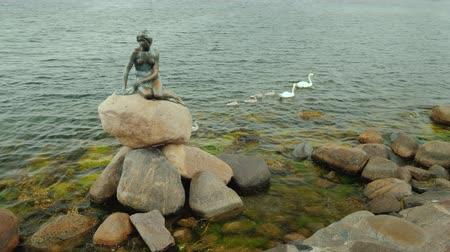 mermaid : Copenhagen, Denmark, July 2018: The statue of the Little Mermaid in the Bay of Copenhagen, a swan with small chicks next to it. Rainy weather Stock Footage